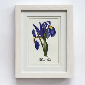 Blue Iris 280x330mm