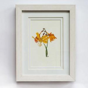 Daffodil 280x330mm