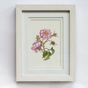 Pink Rose 280x330mm