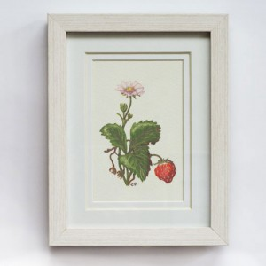 Strawberry 280x330mm