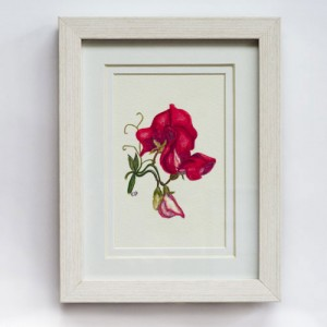 Sweet Pea 280x330mm